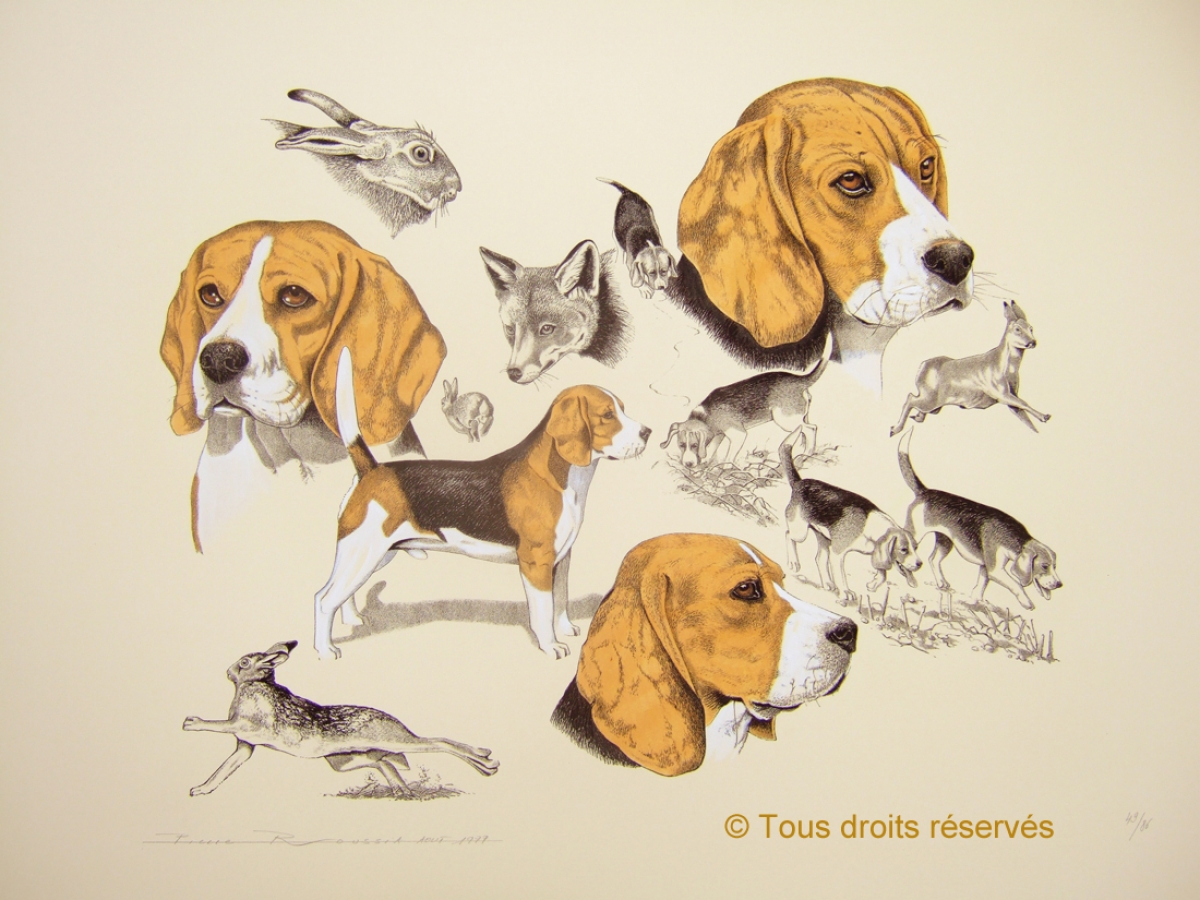 Beagle : Lithographies Chiens
